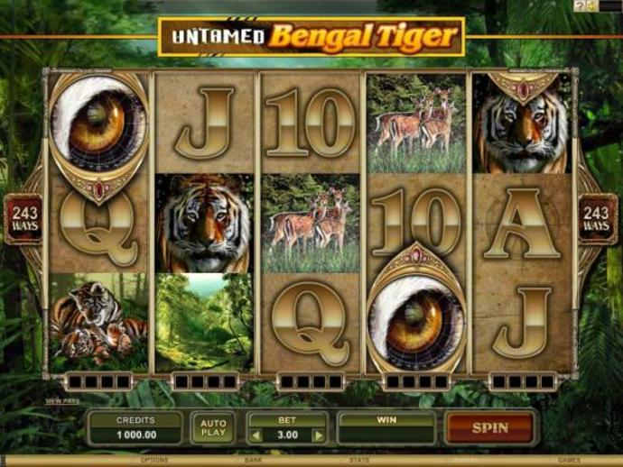 Bengal Tiger: Feel Little Wild